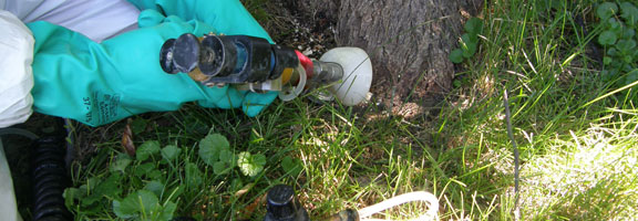 Kildonan Tree Service offers injection services to help combat Dutch Elm Disease.