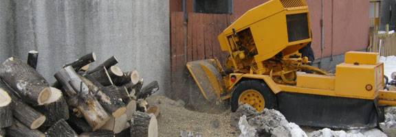 Stump removal services in Winnipeg are available from the expert arborists at Kildonan Tree Service.