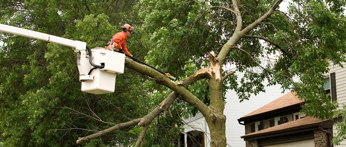 Kildonan Tree Service can make your property more visible with tree pruning services in Winnipeg.