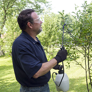 Treatments from Kildonan Tree service experts mean you may be able to avoid tree removal in Winnipeg.