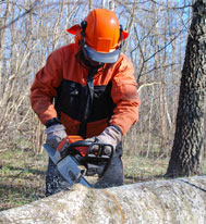 Kildonan Tree Service offers tree removal in Winnipeg, with removing cut pieces as part of our offering.