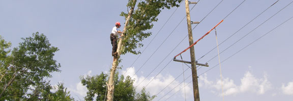 Tree removal in Winnipeg is best left to the experts at Kildonan Tree Service.