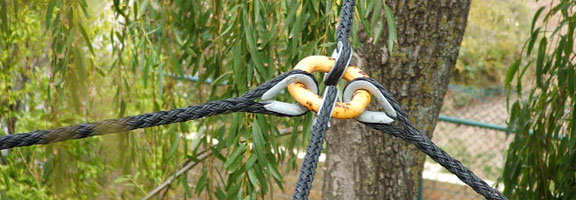 Cable bracing is one of the many tree services in Winnipeg available from Kildonan Tree service.