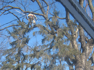 Tree trimming in Winnipeg is daunting, but Kildonan Tree Serivce arborists are up for the challenge.