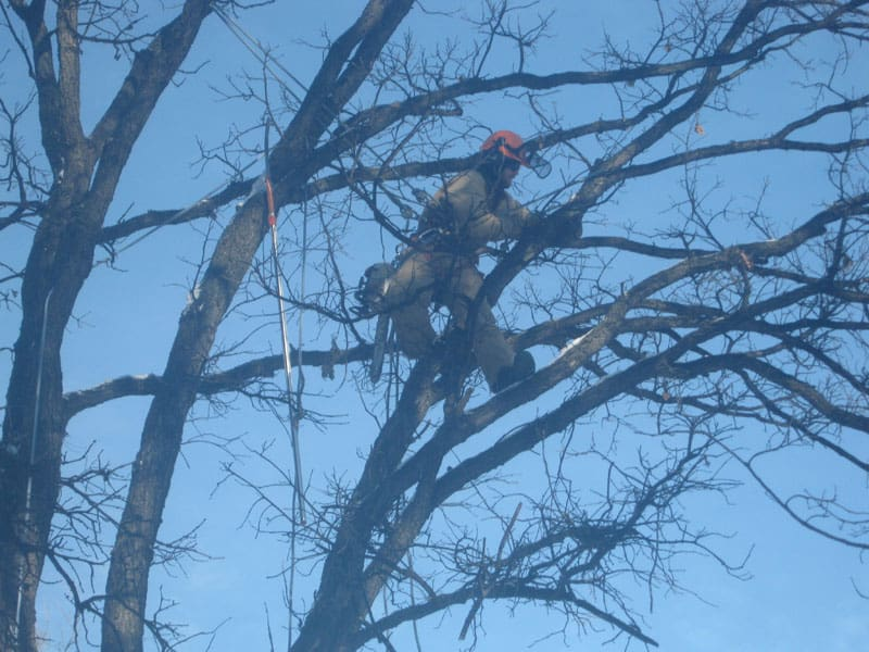 Tree pruning is a dangerous job. Leave it to the experts at Kildonan Tree Service.
