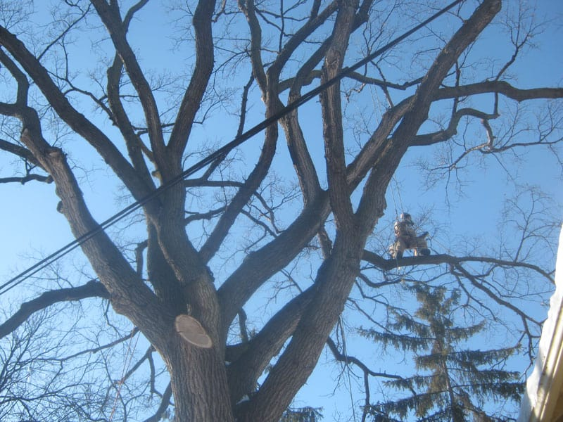 Don't DIY - call the experts at Kildonan Tree Service for tree pruning in Winnipeg.