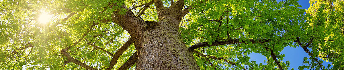 Arborists from Kildonan Tree Service go to any length (or height) to provide expert tree care.