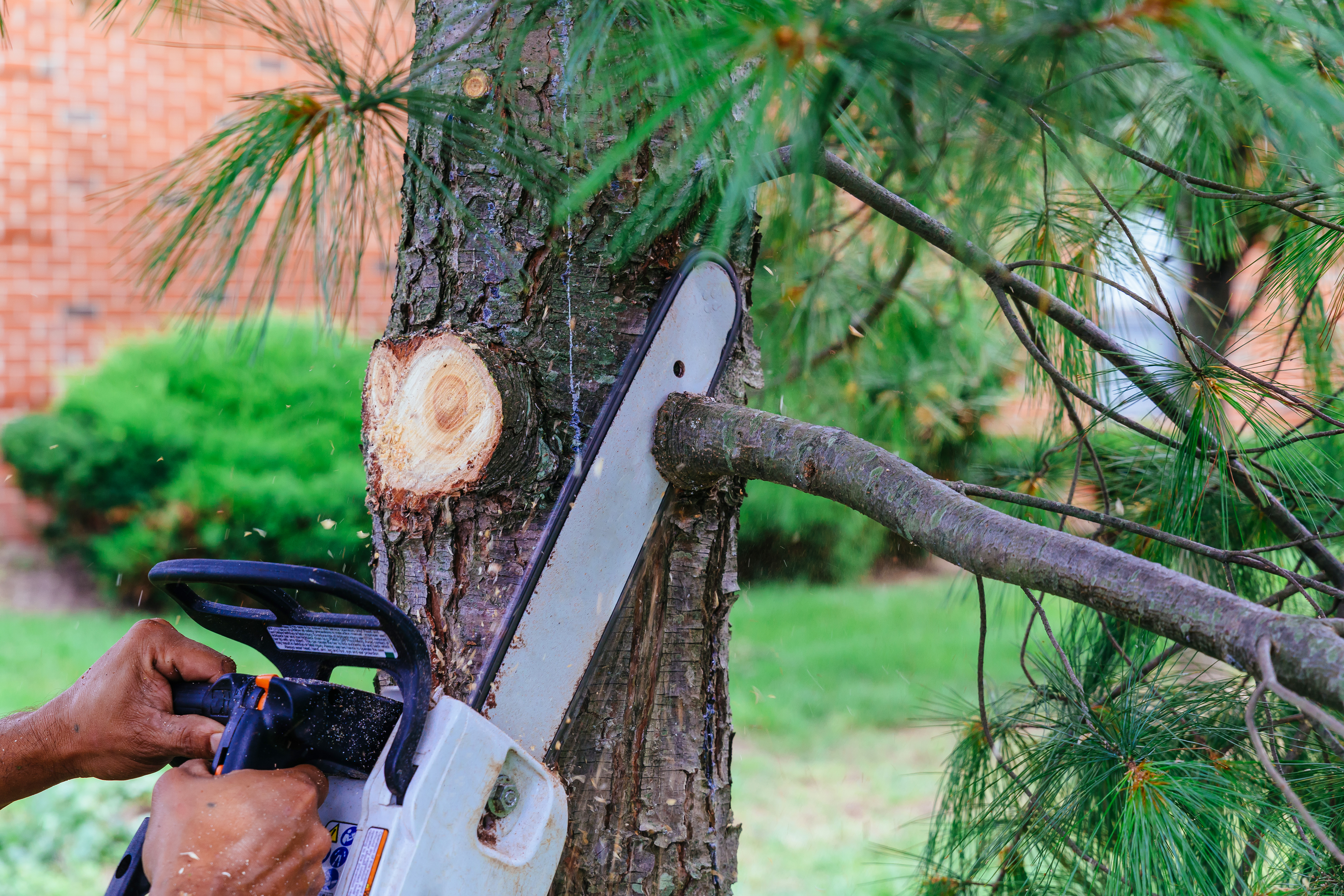 A little off the top: The importance of pruning your trees