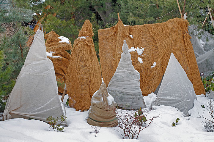 covered bushed with plastic and brown cloth. Ground is full of snow and green trees in the background