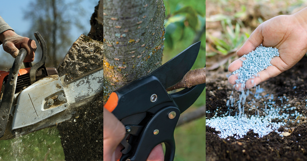 Three photo gallery   chainsaw cutting through a tree   clipper cutting off a branch   hand fertilizing on the ground   Kildonan Tree Services
