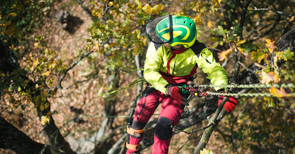 Kildonan Tree Services | A Day in the Life of a Certified Winnipeg Arborist | Arborist hanging from a tree