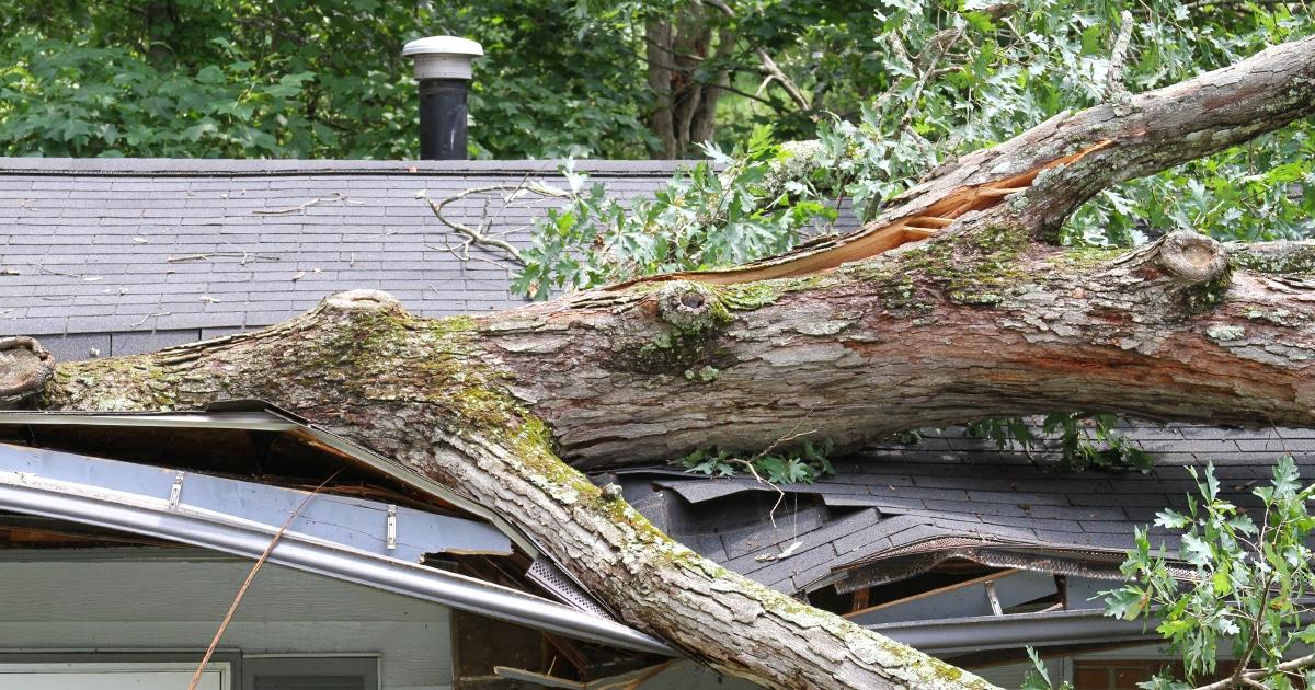 Kildonan Tree Service | Broken tree on top of a house